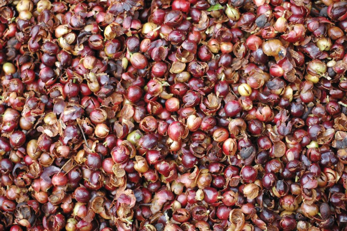 Used berries